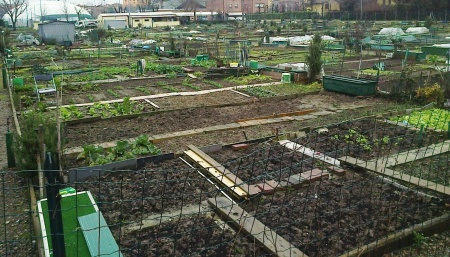 Disciplined allotment